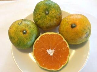 orange_004_m